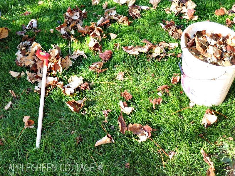 autumn outdoors