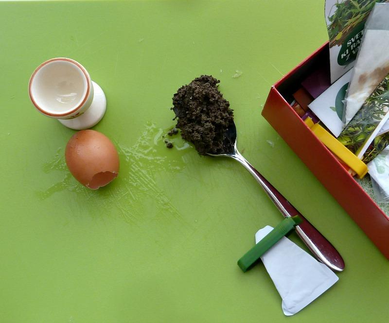 seed starting in eggshells
