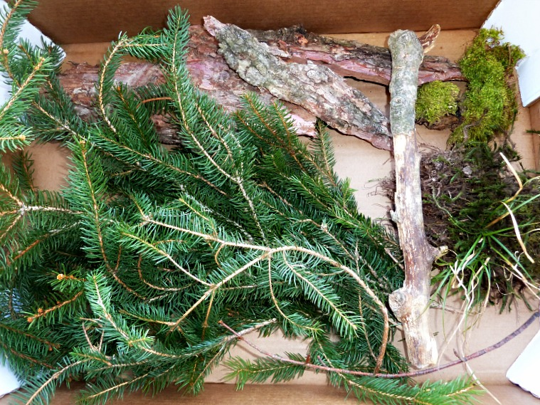 forest sensory bin and natural materials
