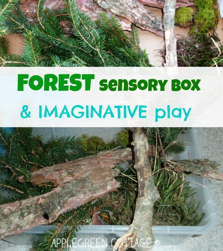 Sensory bin ideas - Forest