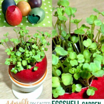 eggshell garden