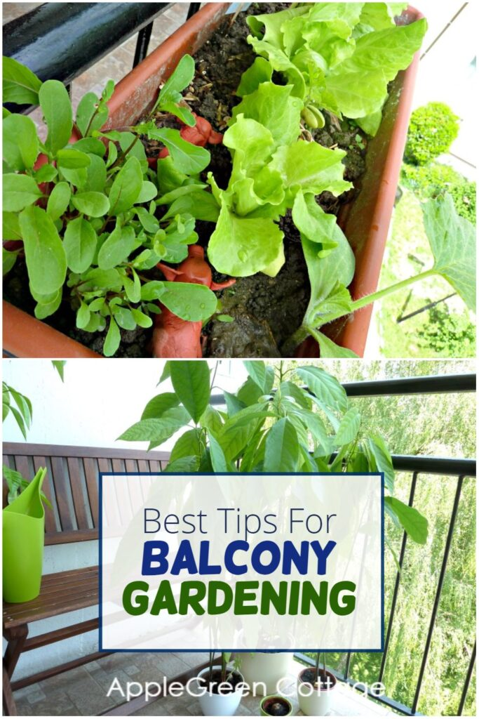 container gardening on a balcony